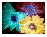 Flower Power Photographic Print by Florene Welebny