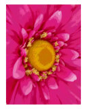 Big Pink Flower Photographic Print by Florene Welebny