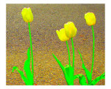 Tulips By The Street IV Photographic Print by Michelle Calkins