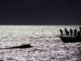 Tourists on Boat Sighting Humpback Whale, Maui, Hawaii, USA Photographic Print by Karl Lehmann