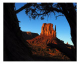 Monumental Forest Photographic Print by Harley Lever