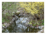 Stream Photographic Print by Joan Sonnier