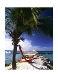 Palm and a Hammock Flamingo Beach Aruba Photographic Print by George Oze