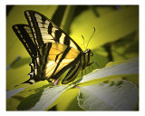 On Golden Wings Photographic Print by Rick Riley