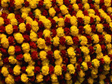 Marigolds for Sale at Flower Market, Kolkata, India Fotografie-Druck von Richard I&#39;Anson