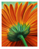 Sunflower 2 Photographic Print by Balthus Taurog