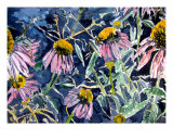 Echninacea Cone Flowers Photographic Print by Derek Mccrea
