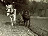 Farmer Ploughing His Field with Horses Photographic Print