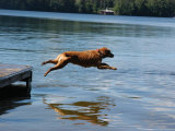 A Dog Jumps into a Lake Chasing a Ball Photographic Print by Stacy Gold