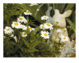 Daisy Bunny Photographic Print by Dave Simpson