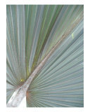 Pleated Perfect Photographic Print by Florene Welebny