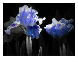 Black And Blue Photographic Print by Mary Lane