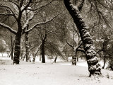 Queens Park Manchester in the Winter Photographic Print