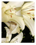 Sunny Lillies Photographic Print by Dave Simpson