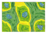 Green Blue And Yellow Footprint Photographic Print by Ruth Robbins