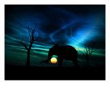 Elephant Sunrise 96 Photographic Print by Chris Harvey