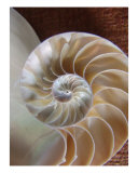 Nautilus Shell Photographic Print by Florene Welebny