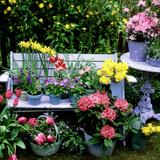 Violet, Bellflower,Tulip, Daffodil, Forget Me Not, and Azalea Reproduction photographique par Lynne Brotchie