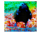 Approaching Blackbird Photographic Print by Randi Bailey