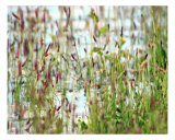 Reeds In Water Photographic Print by Sari Mcnamee