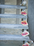 Steps, Caye Caulker, Belize Photographic Print by Russell Young