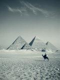 Camel and Giza Pyramids, Giza, Cairo, Egypt Fotodruck von Jon Arnold