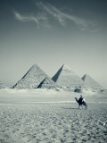 Camel and Giza Pyramids, Giza, Cairo, Egypt Photographic Print by Jon Arnold