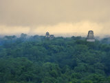 Tikal Pyramid Ruins and Rainforest, Dawn, Guatemala Photographie par Michele Falzone