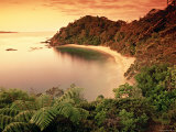 Whale Bay, Northland, New Zealand Photographic Print by Doug Pearson