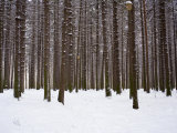 Winter Forest in Snow, Moscow, Russia Fotodruck von Ivan Vdovin