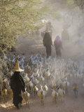 Goat Herder, Al Wadi Dawan, Nr Wadi Hadhramawt, Yemen Photographic Print by Peter Adams