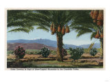 California - Dates Growing in the Coachella Valley Art
