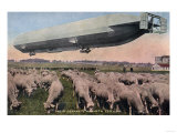 Germany - View of a Zeppelin Blimp over Grazing Sheep Prints