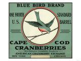 Cape Cod, Massachusetts - Blue Bird Brand Cranberry Label Prints