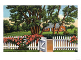 Cape Cod, Massachusetts - View of a Quaint Residence Prints