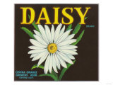 Daisy Brand Citrus Crate Label - Covina, CA Art