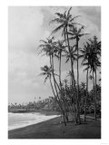 Coconut Palms - Hawaiian Islands Photograph Prints by  Lantern Press