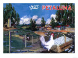 Petaluma, California - World's Egg Basket Poster Poster