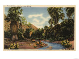 Palm Springs, California - View of Palm Springs Canyon Print