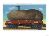Maine - View of the Kind of Potatoes that are Raised in Maine Posters