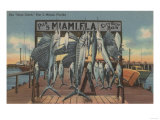 Miami, Florida - View of Pier 5 with Caught Fish Posters