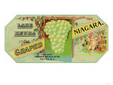 Penn Yan, New York - Lake Keuka Niagara Grapes Label, Laureled Child in Grapes Posters