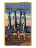 Santa Catalina, California - Little Girls Looking at Caught Swordfish Posters