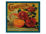 Camellia Orange Label - Redlands, CA Posters by  Lantern Press