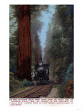 Santa Cruz, California - Big Tree Railroad Station Posters by  Lantern Press