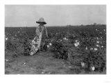 Black Boy Picking Cotton Photograph - West, Texas Print by  Lantern Press