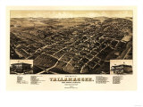 Tallahassee, Florida - Panoramic Map Posters