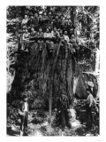 Lumberjacks prepairing Fir Tree for St. Louis World's Fair Photograph - Washington State Giclée-Premiumdruck von  Lantern Press