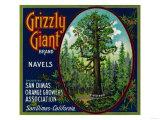 Grizzly Giant Orange Label - San Dimas, CA Prints