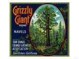Grizzly Giant Orange Label - San Dimas, CA Prints by  Lantern Press